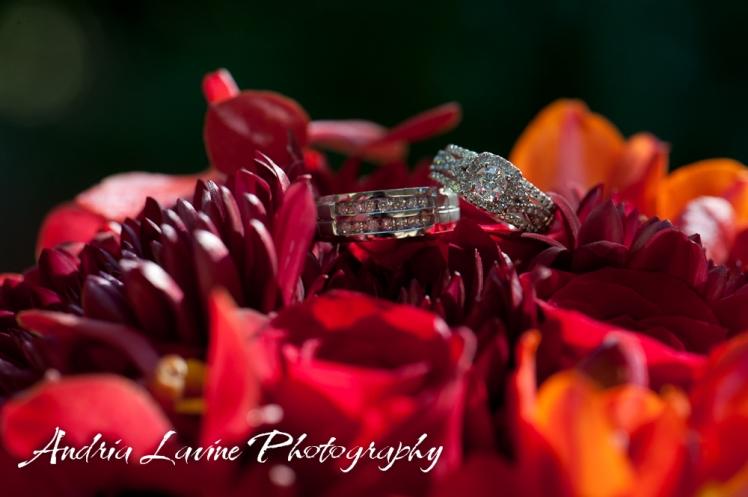Andria Lavine Photography