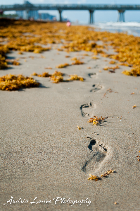 ©Andria Lavine Photography_Beach2015-4685-photo